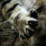 nail_cat